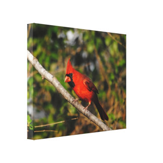 Male Cardinal Stretched Canvas Print