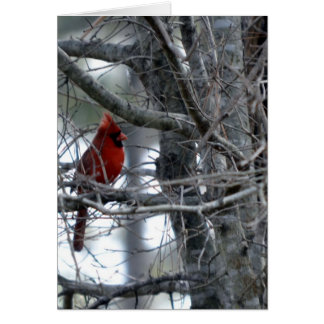 Male Cardinal Watch Guard Cards
