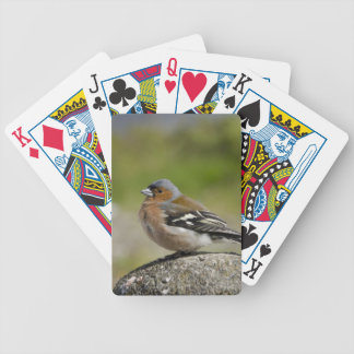 Male Chaffinch (WILD: Fringilla coelebs) Bicycle Playing Cards