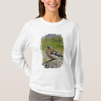 Male Chaffinch (WILD: Fringilla coelebs) T-Shirt