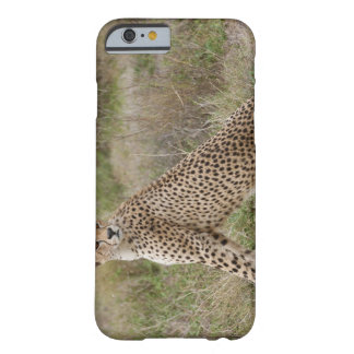 male Cheetah, Acinonyx jubatus, Serengeti, Barely There iPhone 6 Case