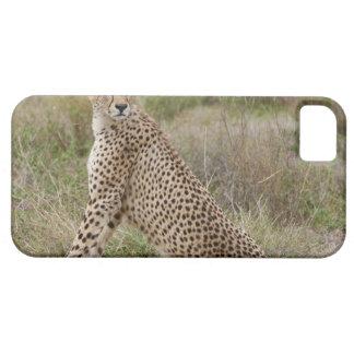 male Cheetah, Acinonyx jubatus, Serengeti, iPhone 5 Case