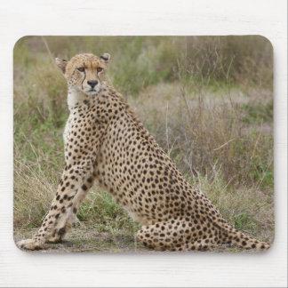 male Cheetah, Acinonyx jubatus, Serengeti, Mouse Pad