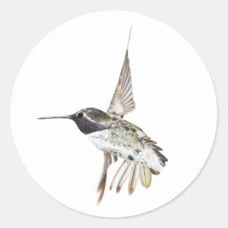 Male Costa's Hummingbird sticker