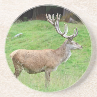 male deer coaster