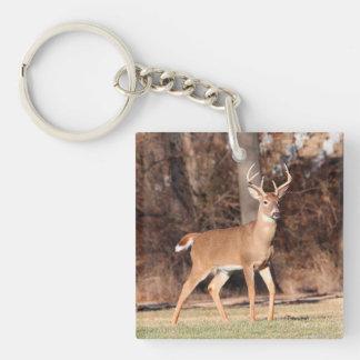 Male Deer Key Ring