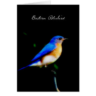 Male Eastern Bluebird Blank Note Card