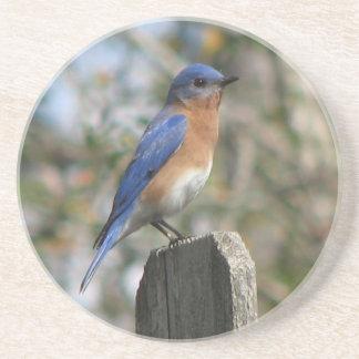 Male Eastern Bluebird Coaster