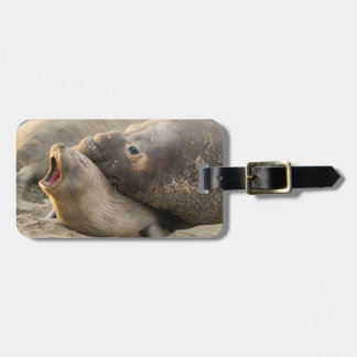Male elephant seal gives love bite to female luggage tag
