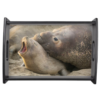 Male elephant seal gives love bite to female serving tray