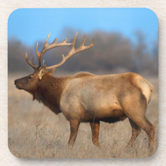 Male elk profile in autumn coaster