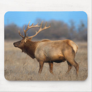 Male elk profile in autumn mouse pad