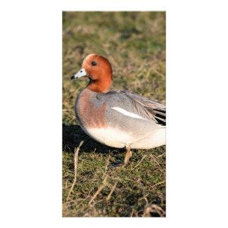 Male Eurasian Wigeon Duck walks in a grassy field Personalized Photo Card