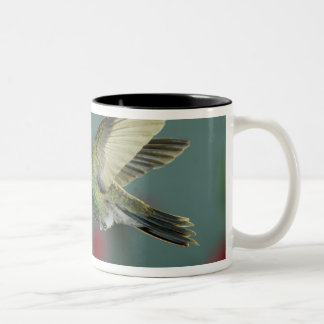 male feeding on Petunia, Madera Canyon, Arizona, Two-Tone Coffee Mug