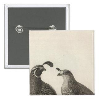 Male & Female Partridge of California 15 Cm Square Badge