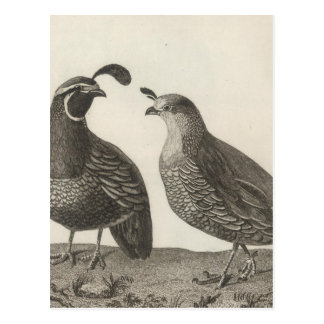 Male & Female Partridge of California Postcard