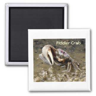 Male Fiddler Crab Square Magnet