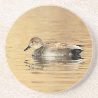Male Gadwall Duck Coaster