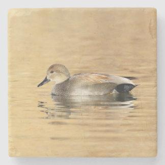 Male Gadwall Duck Stone Coaster