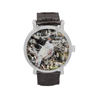Male Gambel's Quail Wrist Watch
