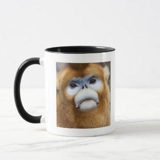 Male Golden Monkey Pygathrix roxellana Mug