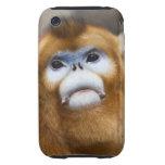 Male Golden Monkey Pygathrix roxellana, portrait Tough iPhone 3 Cases