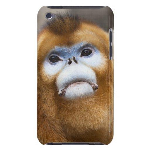 Male Golden Monkey Pygathrix roxellana, portrait iPod Touch Case-Mate Case
