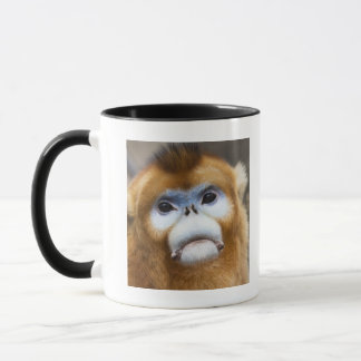 Male Golden Monkey Pygathrix roxellana, portrait Mug