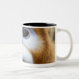 Male Golden Monkey Pygathrix roxellana, portrait Two-Tone Coffee Mug