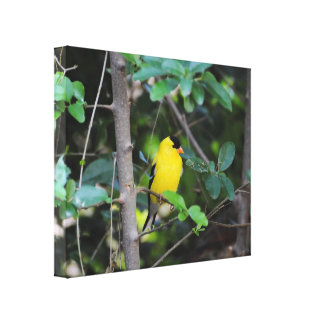 Male Goldfinch 2 Gallery Wrap Canvas