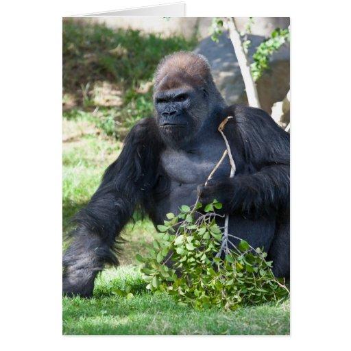 Male Gorilla Greeting Card