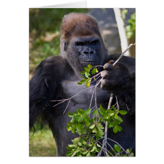 Male Gorilla Greeting Cards