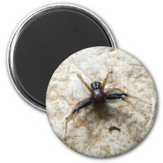 Male Ground Crab Spider Magnet