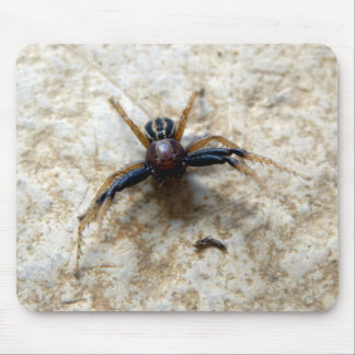 Male Ground Crab Spider Mouse Mat