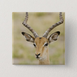 Male impala with beautiful horns in soft light 15 cm square badge