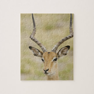 Male impala with beautiful horns in soft light jigsaw puzzle