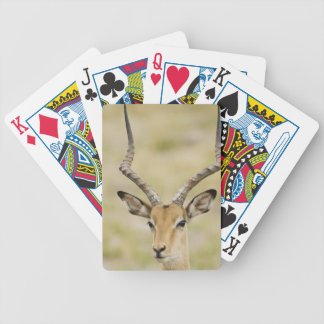 Male impala with beautiful horns in soft light poker deck