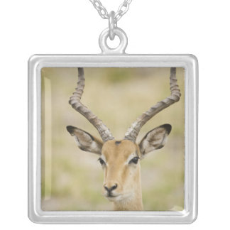 Male impala with beautiful horns in soft light silver plated necklace
