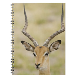 Male impala with beautiful horns in soft light spiral notebook