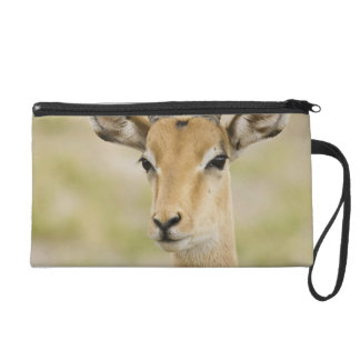Male impala with beautiful horns in soft light wristlet