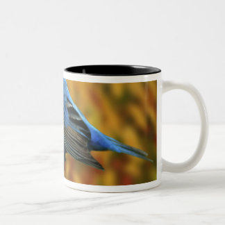 Male Indigo Bunting, Passerina cyanea Two-Tone Coffee Mug