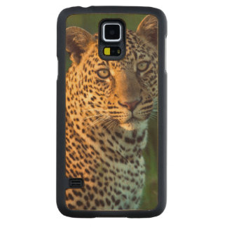 Male Leopard (Panthera Pardus) Full-Grown Cub Carved Maple Galaxy S5 Case