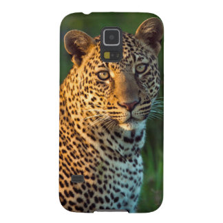 Male Leopard (Panthera Pardus) Full-Grown Cub Galaxy S5 Cover