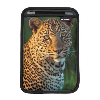 Male Leopard (Panthera Pardus) Full-Grown Cub iPad Mini Sleeve