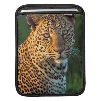 Male Leopard (Panthera Pardus) Full-Grown Cub iPad Sleeve