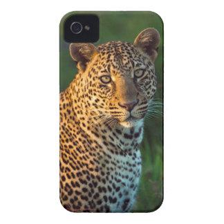 Male Leopard (Panthera Pardus) Full-Grown Cub iPhone 4 Case-Mate Case