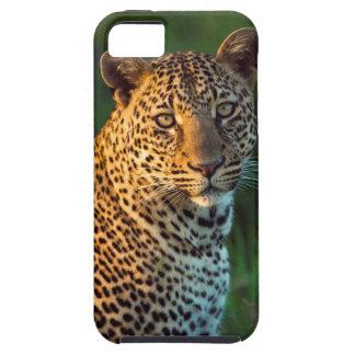 Male Leopard (Panthera Pardus) Full-Grown Cub iPhone 5 Case