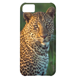 Male Leopard (Panthera Pardus) Full-Grown Cub iPhone 5C Case