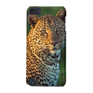 Male Leopard (Panthera Pardus) Full-Grown Cub iPod Touch 5G Cases