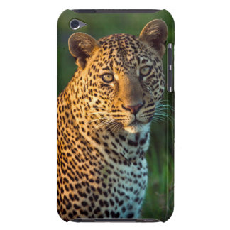 Male Leopard (Panthera Pardus) Full-Grown Cub iPod Touch Cases